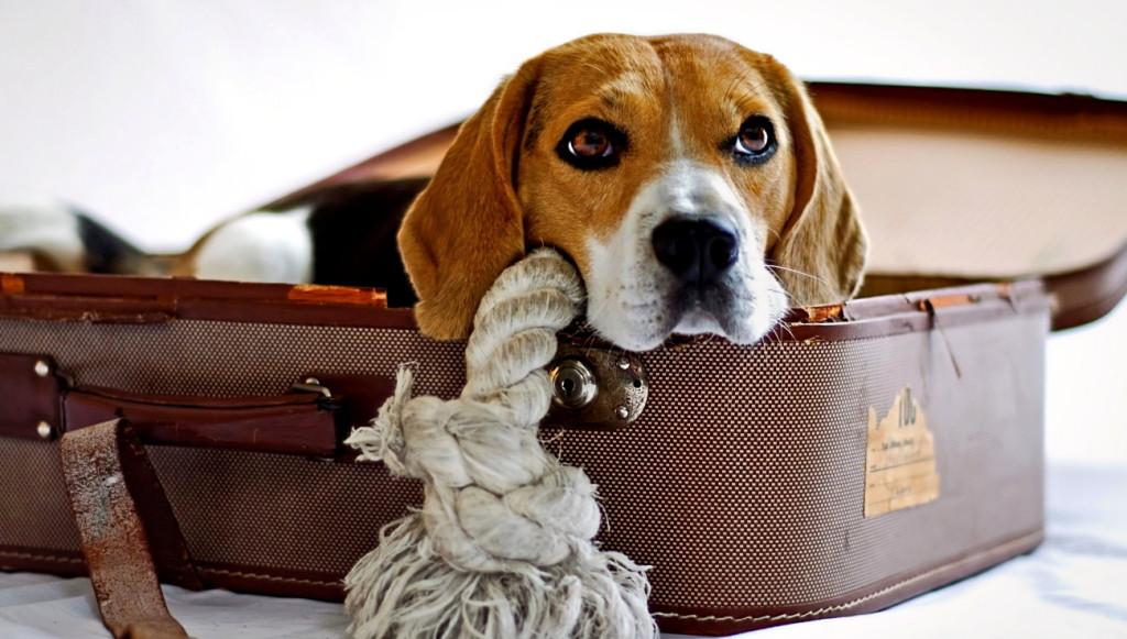 Urlaub mit dem Hund machen