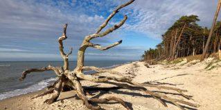 7 Dinge, die Sie an der Ostsee unbedingt erleben sollten!